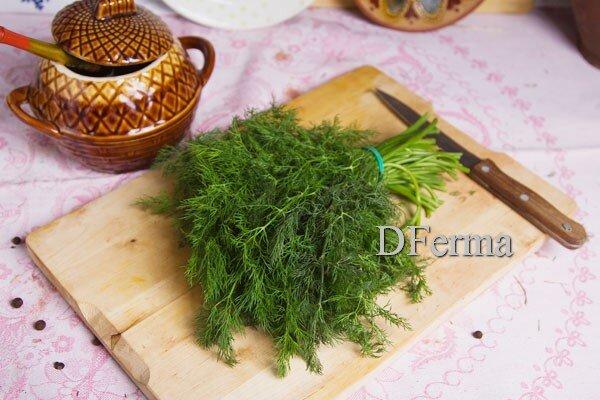Укроп свежий Укроп - одна из самых распространенных и постоянных трав на нашем столе. Ведь кроме исключительных вкусов..