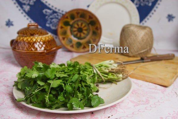 Сежая кинза Кинза или кориандр - одна из самых популярных приправ в Азии. А ещё её называют китайской петрушкой, Египт..