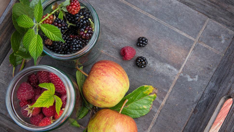 Яблоки Малинка Яблоки малинка раннеосенний сорт яблони, плоды хранятся до конца декабря. Яблоки малинка пригодны для п..