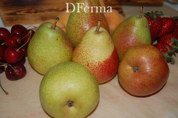 Купить сезонные груши Форель  Груша Форель славится невероятно красивыми, вкусными и полезными плодами. Название сорта..